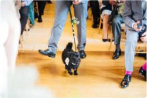 puppy ring bearer