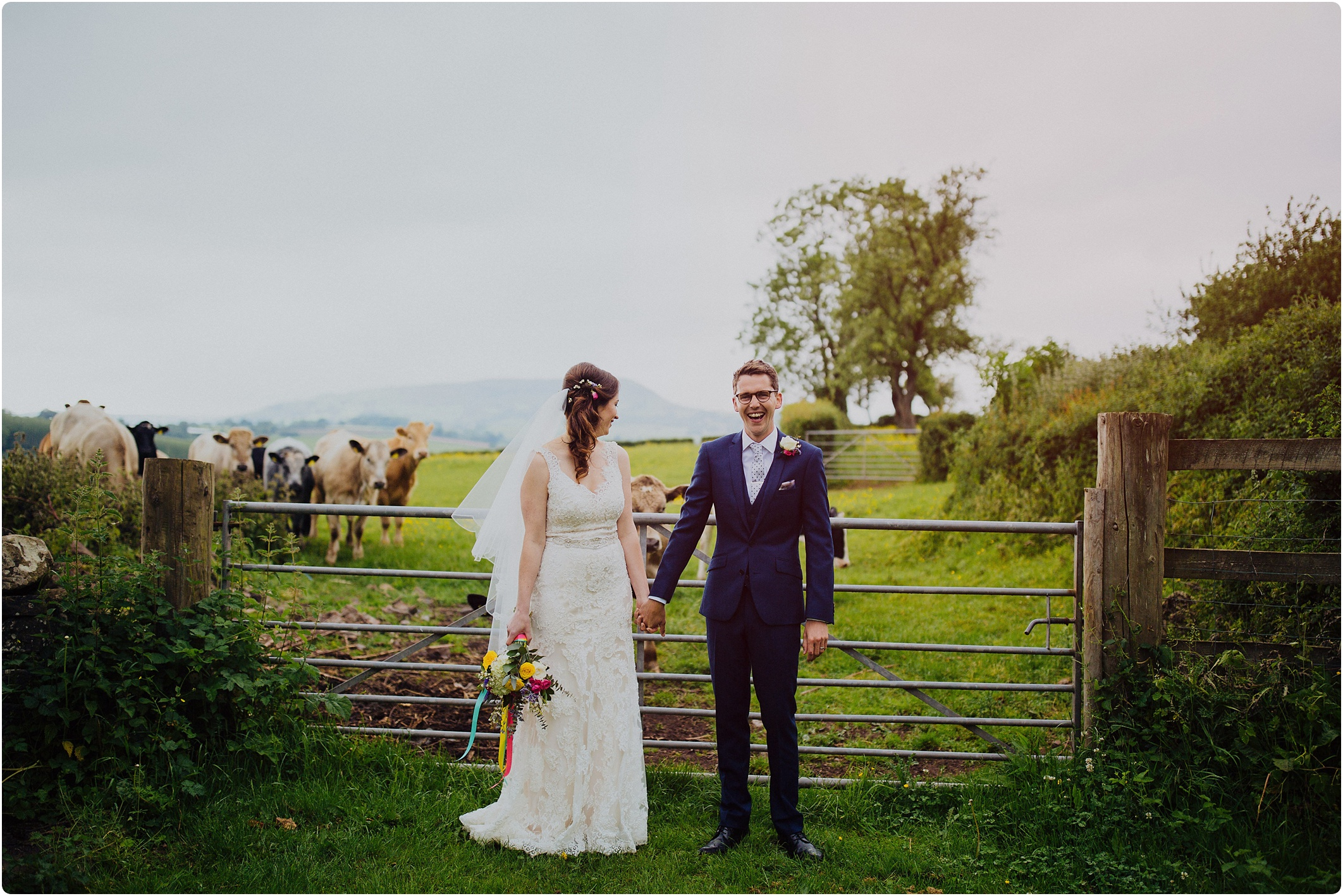 bride and groom with cows
