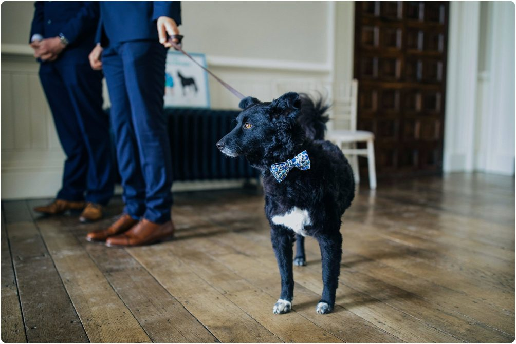 dog with a bowtie at wedding at Elmore Court wedding